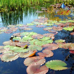 Biotope, Gewässer