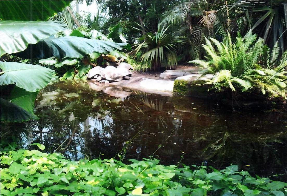 Teich mit Wasserschildkroeten und sichtbarem sandigem Untergrund 31.05.2012